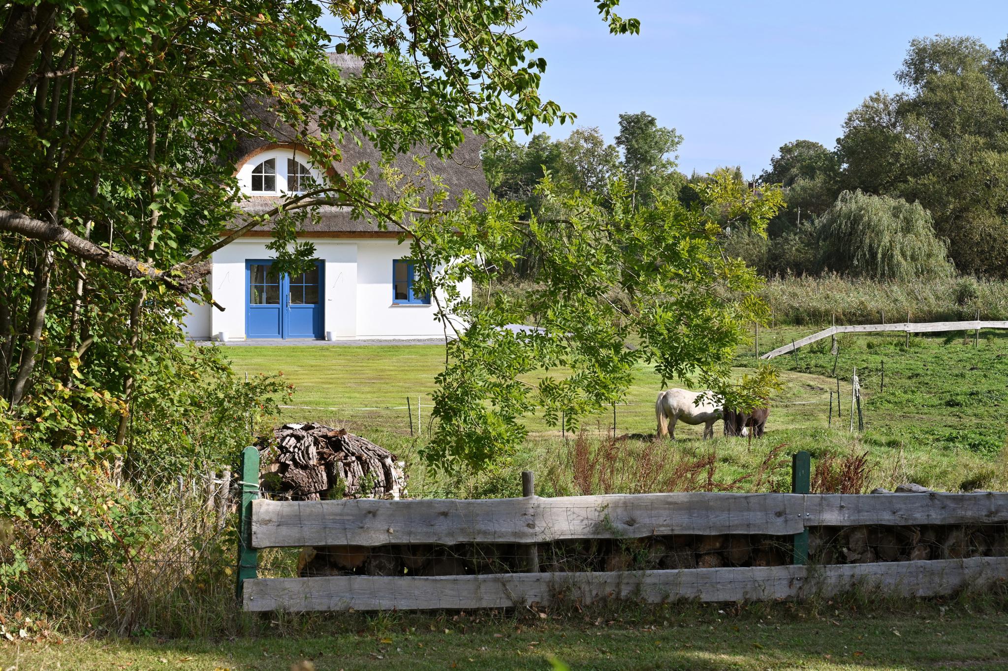 Ferienhaus mit Reetdach, großem Grundstück und Privatweg zum Hafen (2879480), Poseritz, Rügen, Mecklenburg-Vorpommern, Deutschland, Bild 4
