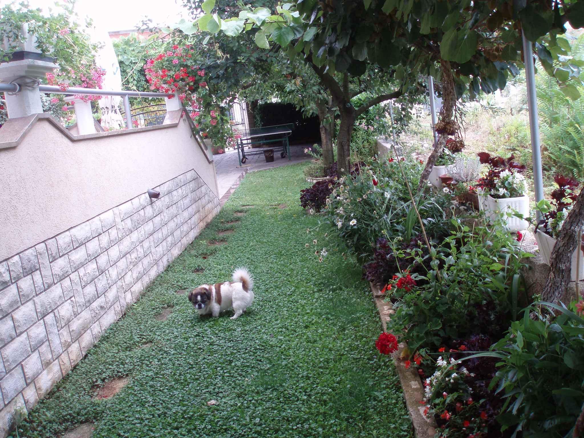 Ferienwohnung mit Tischtennis im Garten (279780), Fažana, , Istrien, Kroatien, Bild 14