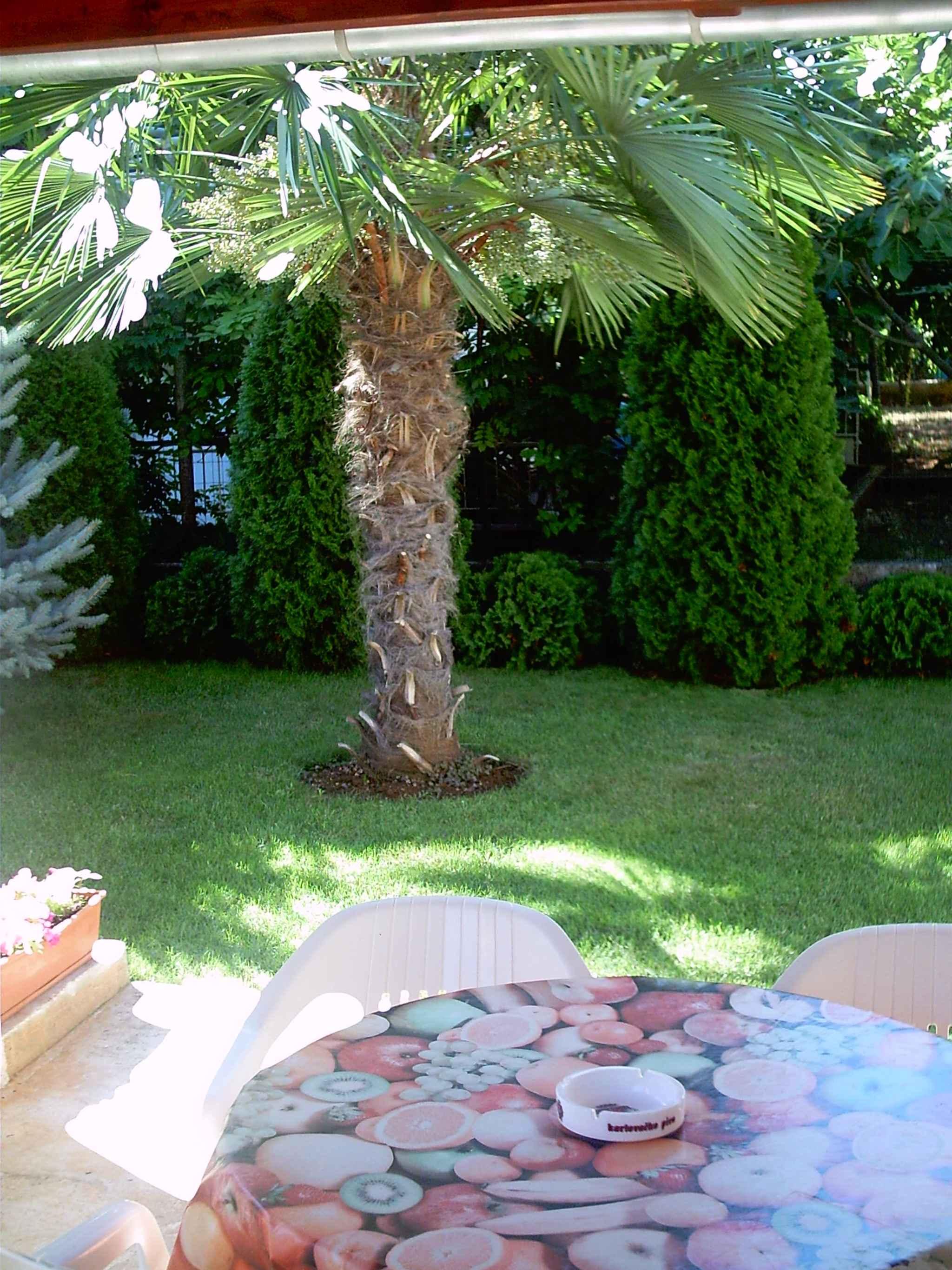 Ferienhaus mit Mikrowelle und SAT-TV (279758), Fažana, , Istrien, Kroatien, Bild 4