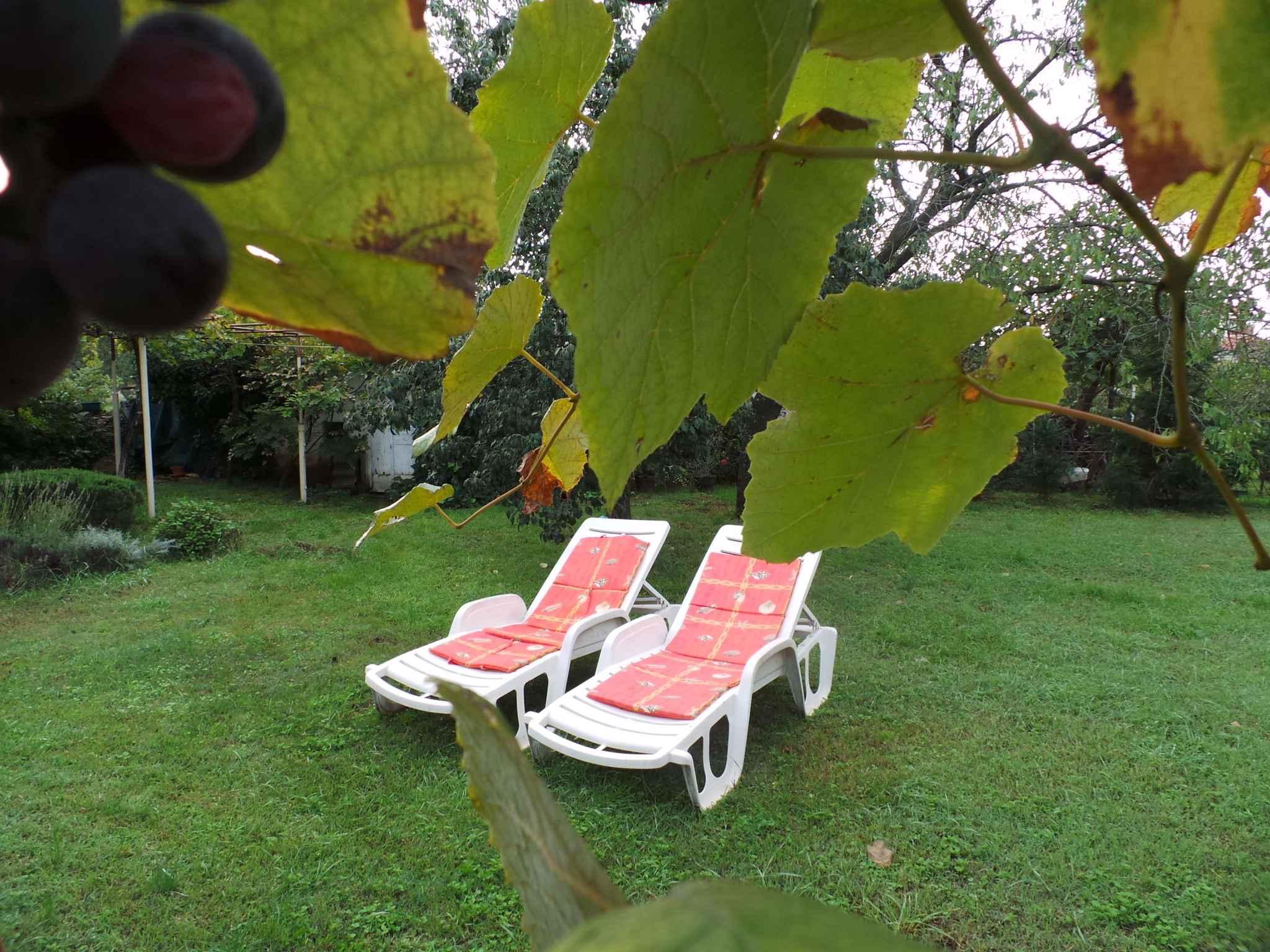 Ferienhaus 300 m zur Adria und mit Garten (280835), Fažana, , Istrien, Kroatien, Bild 8