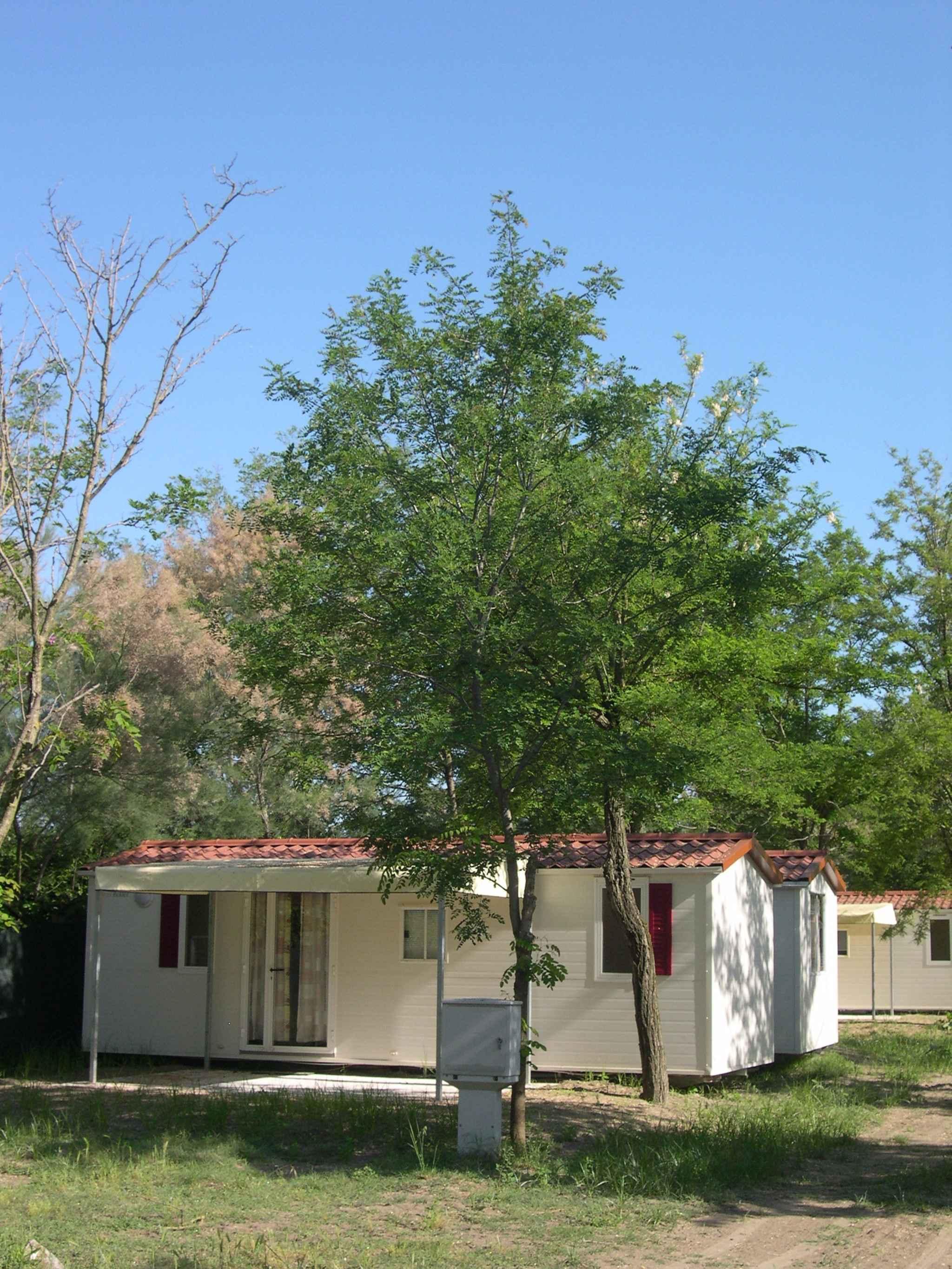 Holiday apartment Mobilehome in Camping Spiaggia e Mare (279174), Porto Garibaldi, Adriatic coast (Emilia-Romagna), Emilia-Romagna, Italy, picture 3