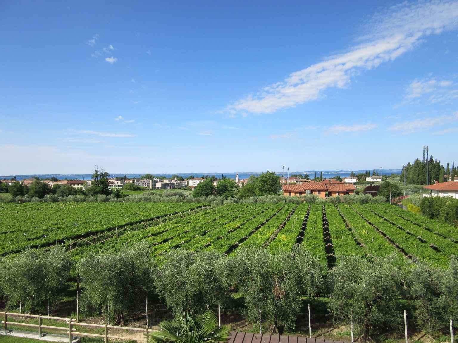 Ferienwohnung Residenz Ca` Bottrigo (279499), Bardolino, Gardasee, Venetien, Italien, Bild 7