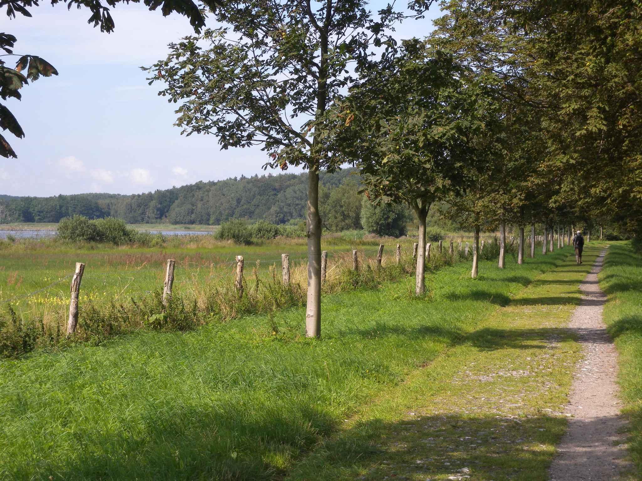 Ferienwohnung mit Terrasse und Garten (311984), Bergen (Rügen), Rügen, Mecklenburg-Vorpommern, Deutschland, Bild 11