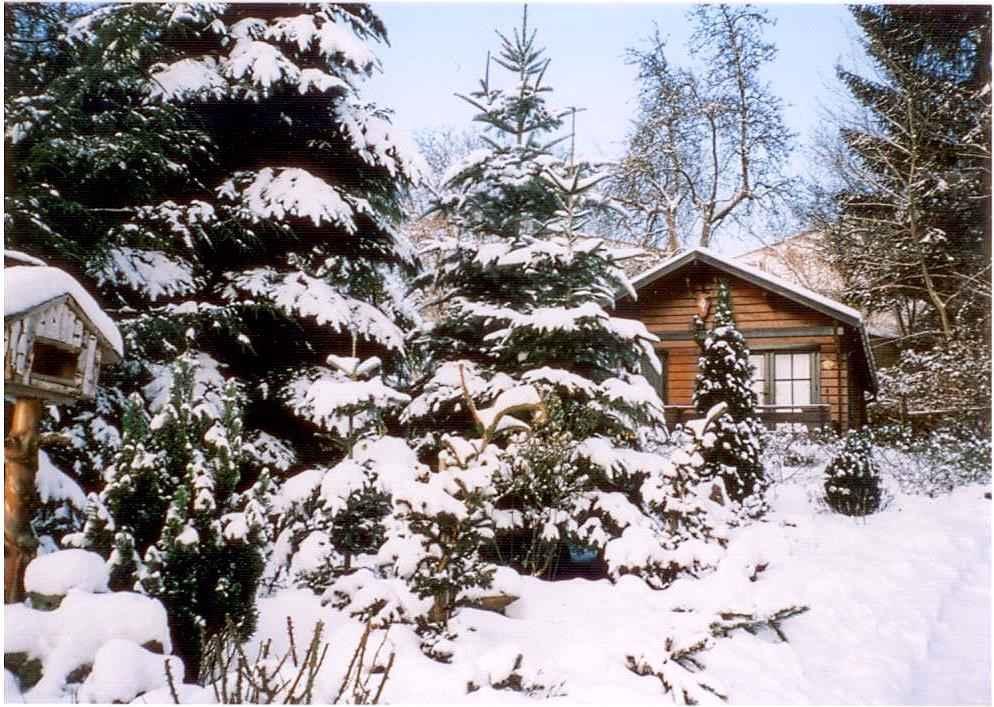 Ferienhaus Hütte mit Terrasse und Garten (317258), Putbus, Rügen, Mecklenburg-Vorpommern, Deutschland, Bild 10