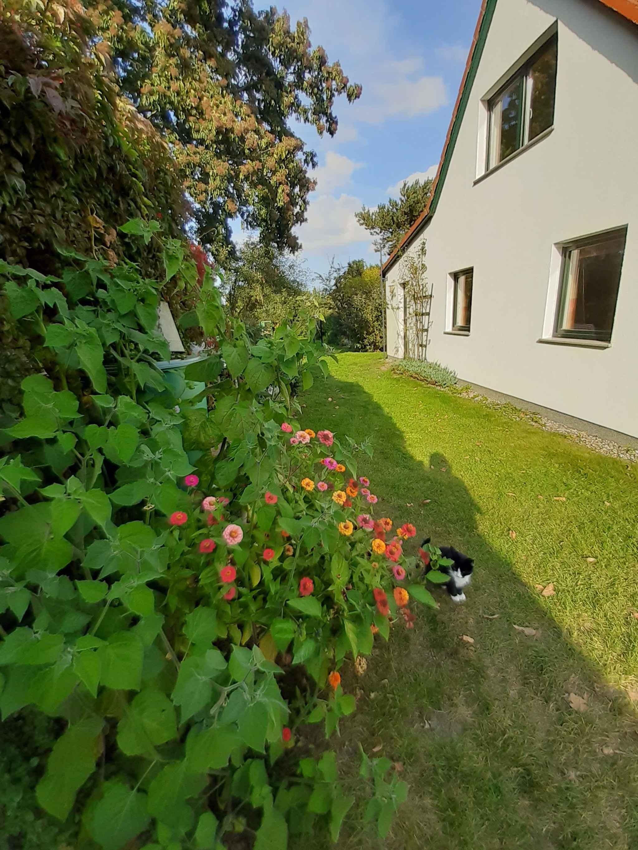 Ferienhaus mit Garten und Terrasse, 800 m zum Strand (314511), Gustow, Rügen, Mecklenburg-Vorpommern, Deutschland, Bild 7