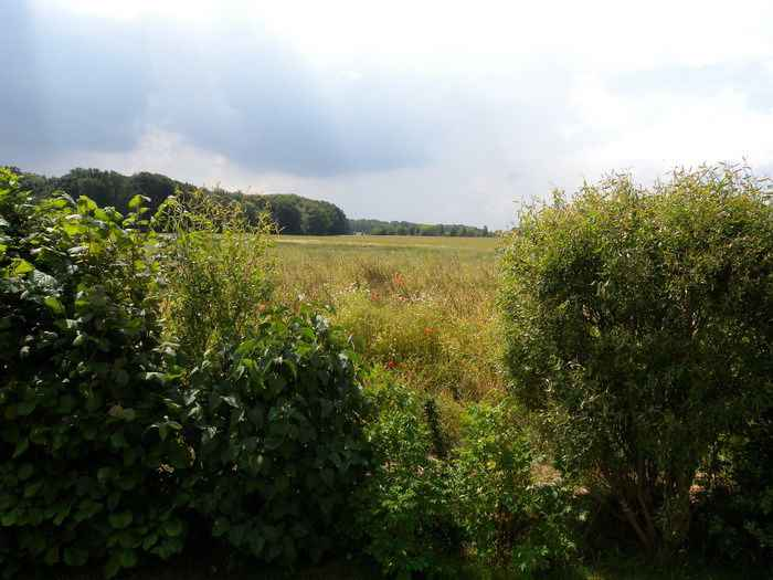 Ferienwohnung mit Garten, direkt im Kranichrastgebiet (360790), Klausdorf, Stralsund, Mecklenburg-Vorpommern, Deutschland, Bild 3