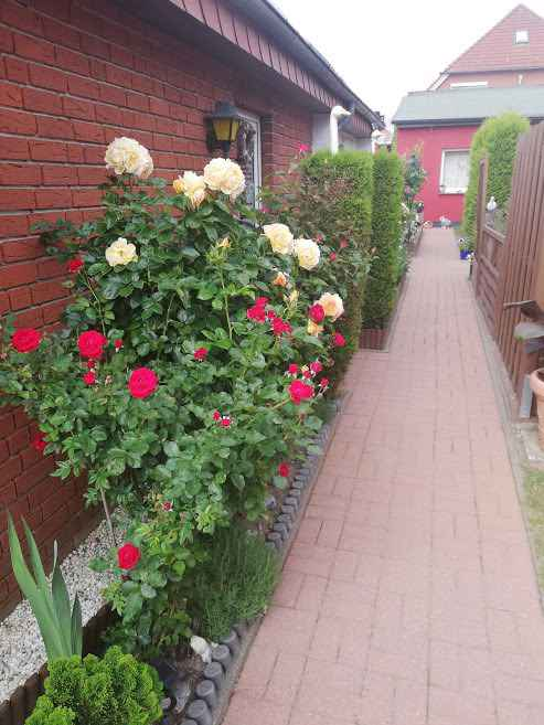 Ferienhaus mit Garten und Grillmöglichkeit (359291), Sassnitz, Rügen, Mecklenburg-Vorpommern, Deutschland, Bild 2
