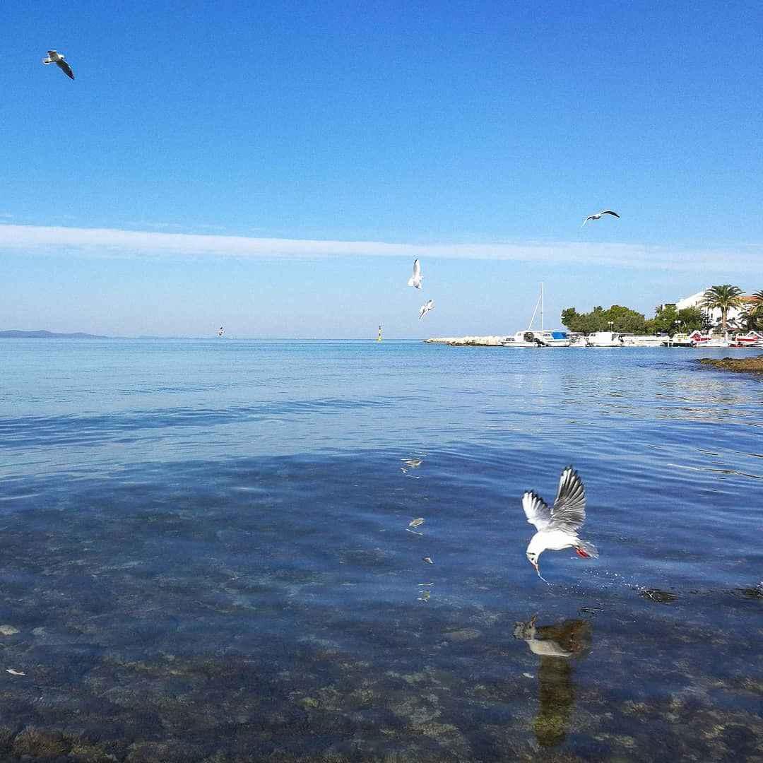 Ferienwohnung in Adrianähe mit Meerblick (278894), Zadar, , Dalmatien, Kroatien, Bild 16