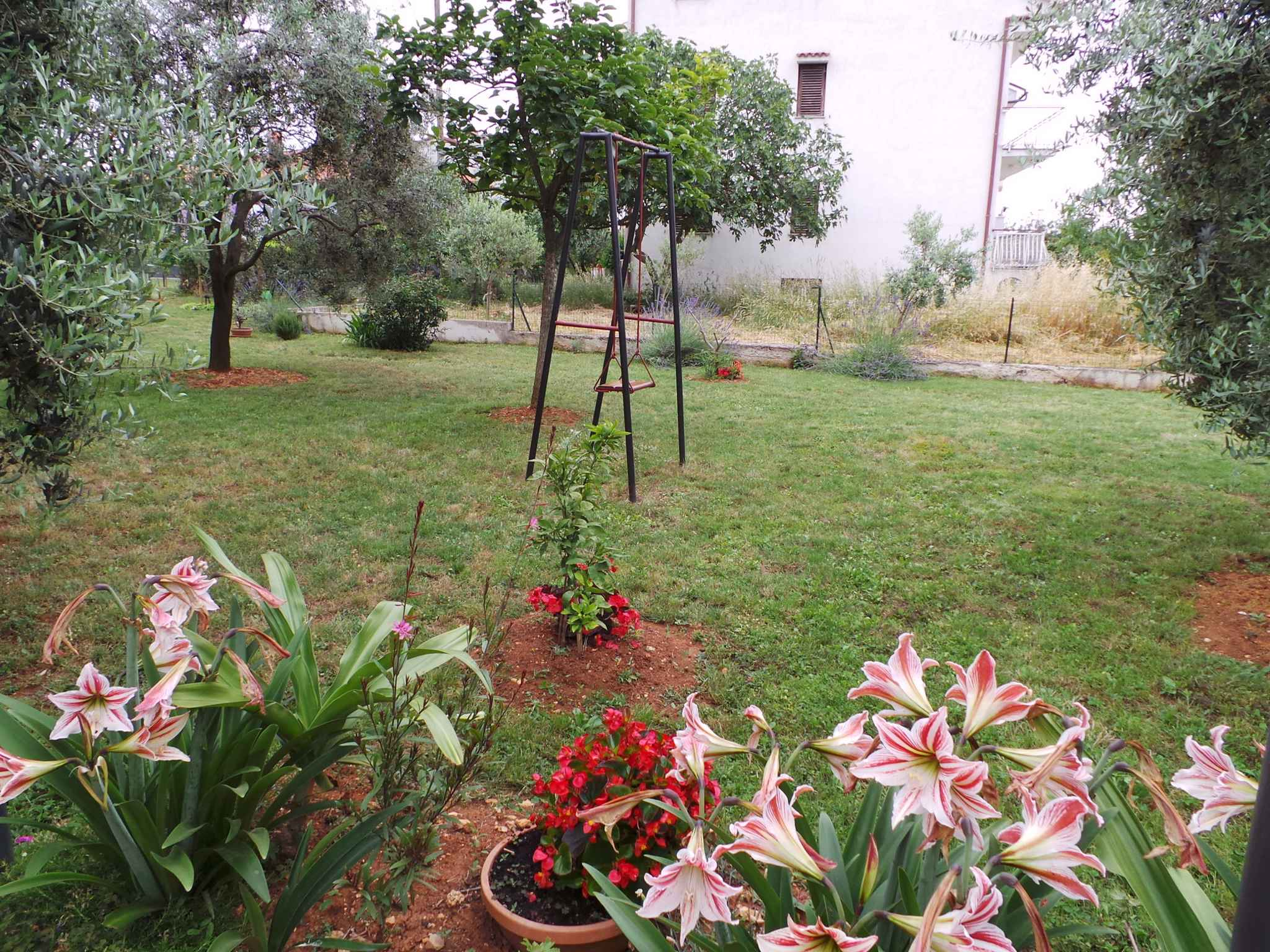 Ferienwohnung mit direktem Zugang zum Garten (279754), Fažana, , Istrien, Kroatien, Bild 4